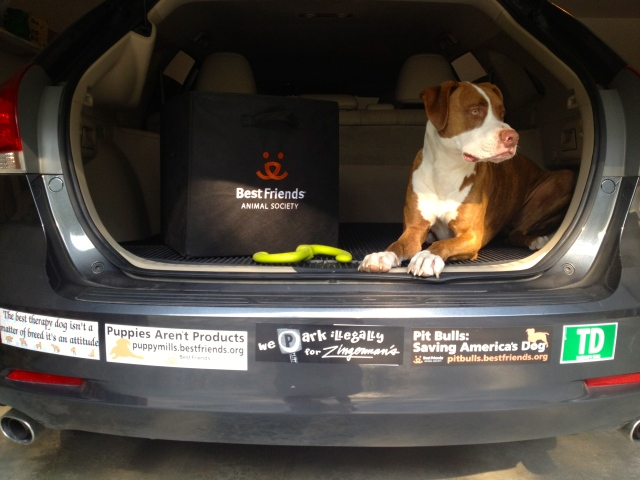 A tailgate moment featuring the Best Friends logo and bumper stickers (Yes, I actually took Buster out to the garage, popped open my hatchback, and put Buster in a down-stay for one specific photo)