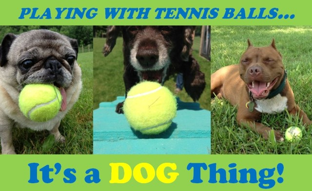 Playing-with-tennis-balls1
