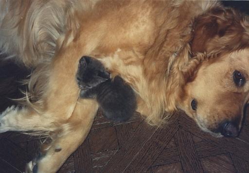 Max and Jake kitten