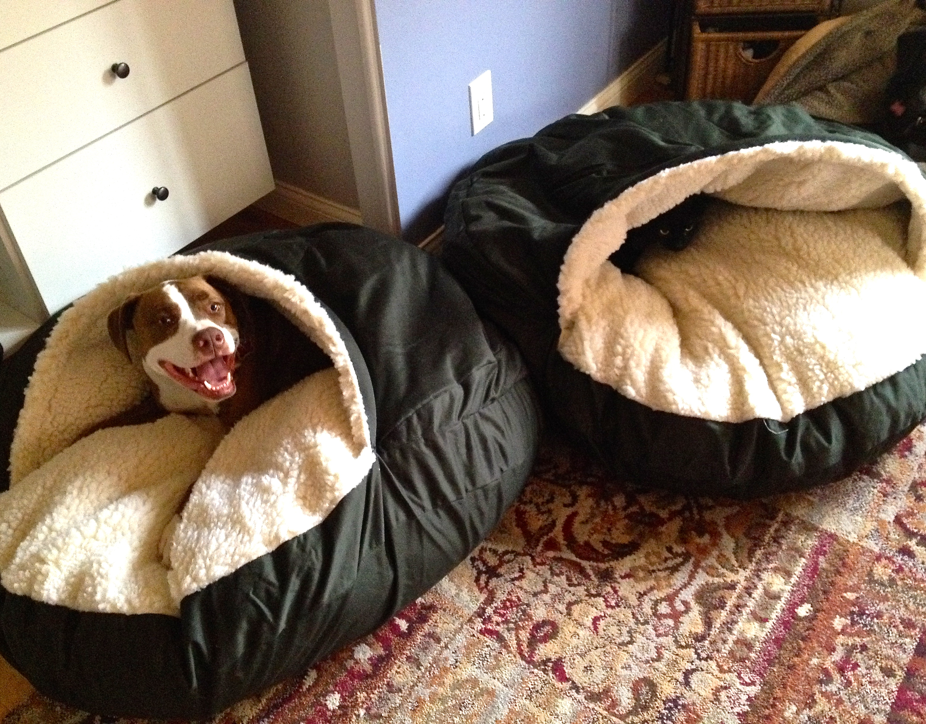 Dog Beds With Lid Covers