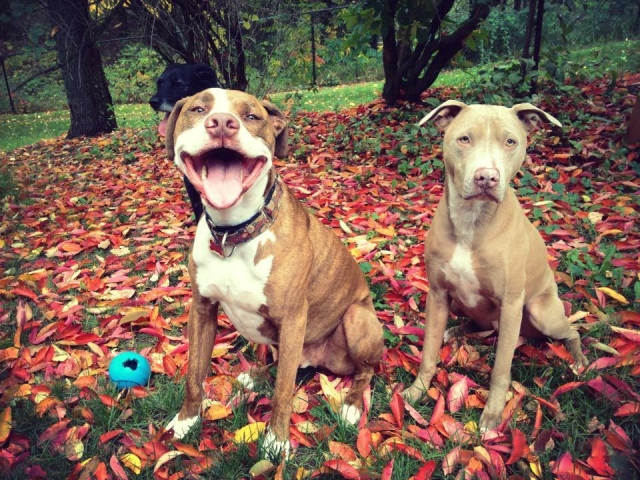 Fall pic of pups