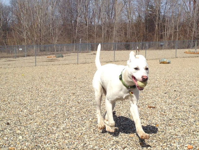 Jumpin' Jak, available at Cascades Humane Society in Jackson, Michigan