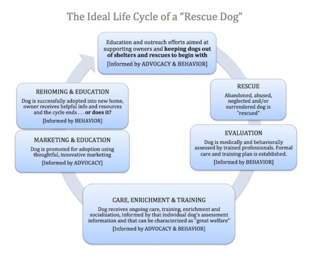 Rescue Dog Life Cycle
