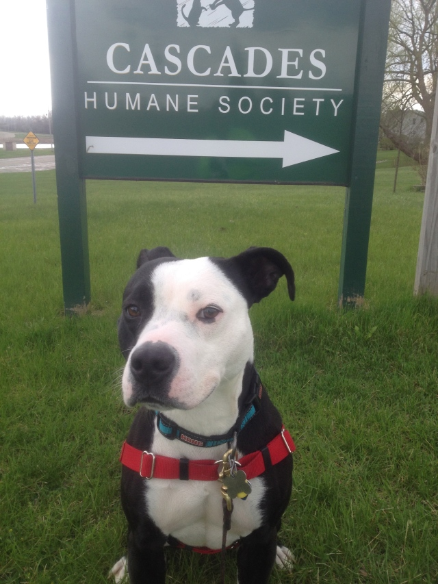 "Ava says, ""This way to ADOPT me!"""