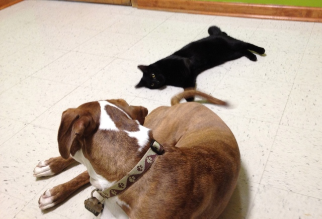 Mose and Buster frequently went to the vet for check-ups together, where Mose happily played with Buster's tail while waiting for the doctor.